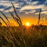 Finanziamenti a fondo perduto agricoltura 2021: come ottenerli
