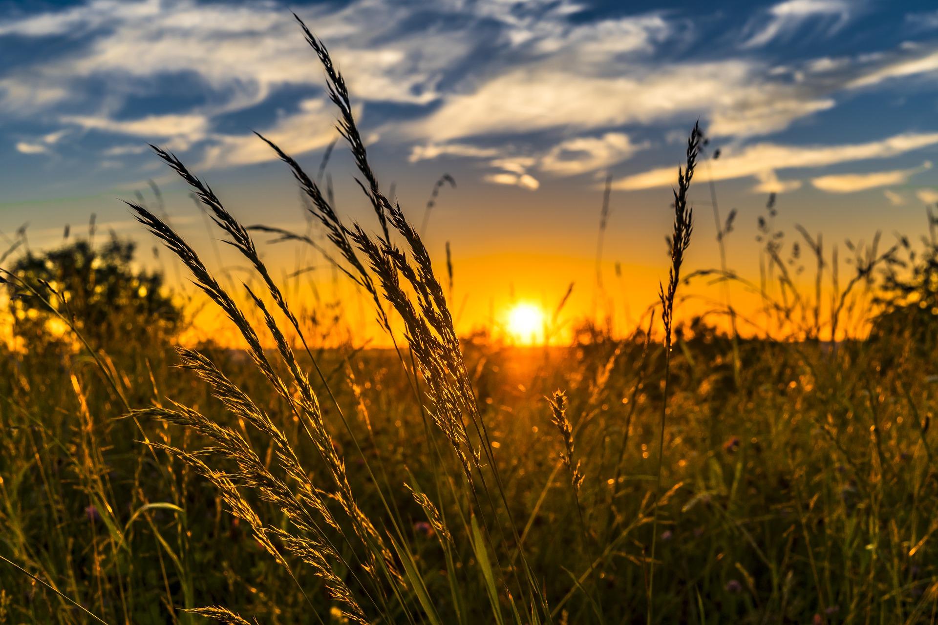 Finanziamenti a fondo perduto agricoltura 2021: guida utile
