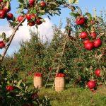 Mutuo Agrario: la tua guida pratica